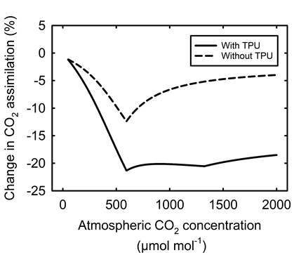The effect of current TBM representation of TPU on the modeled gross CO2 assimilation rate